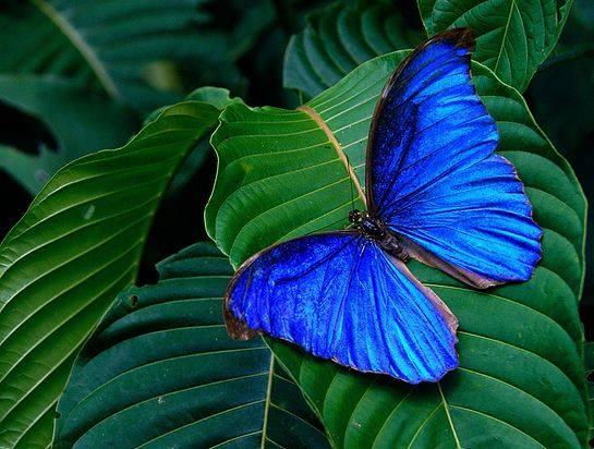 Io metamorfico, dal bruco alla farfalla